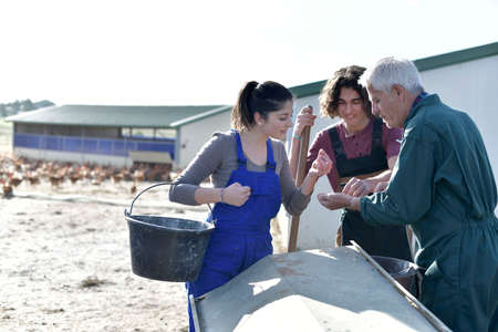 Apprentice with senior farmer in poultry yard