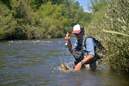 fly fisherman in summer catching brown trout fishing in a mountain river