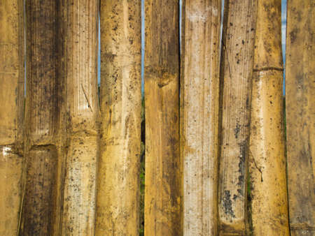 This is an old bamboo fences. It is yellow. Stock Photo - 10487974