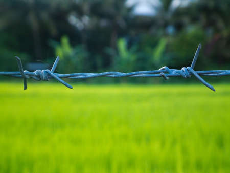 This is the barbed wire and has a background as a rice paddy. Stock Photo - 10487968