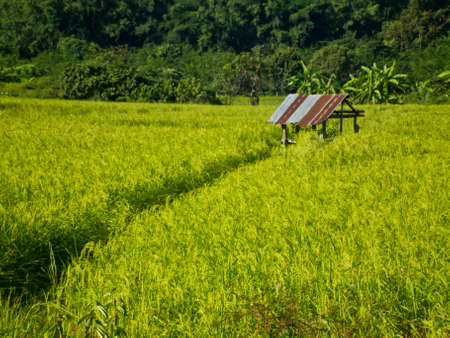 this is cottage in rice fileld ,it Stock Photo - 11270301