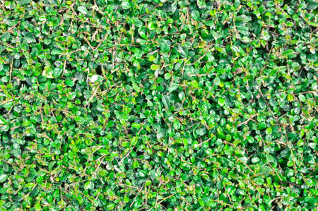 this is texture of plant It Stock Photo - 11941401