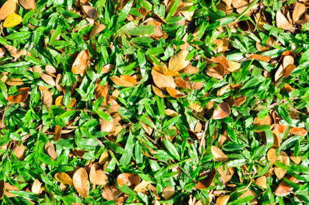 this is a yard pattern It Stock Photo - 11941398