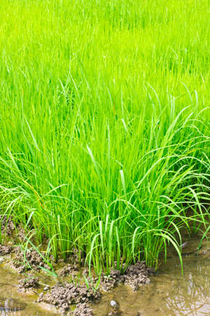 this is a field in a asia zone Stock Photo - 14291532