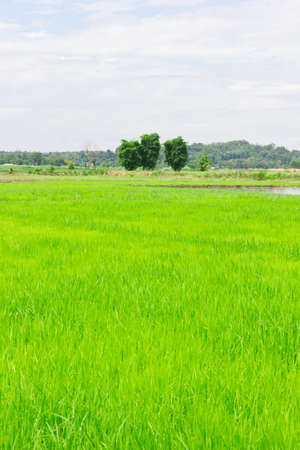 this is a field in a asia zone Stock Photo - 14291526