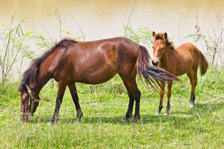 This is a horse it Stock Photo - 14291536
