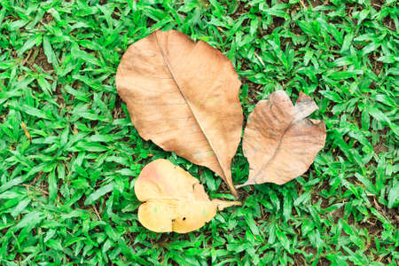 Three dry leaves on green grass