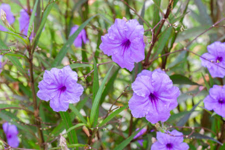Its a flowers name Ruellia, in day light