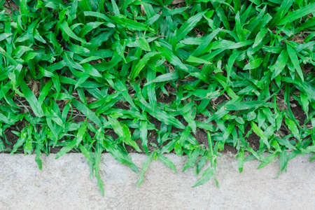 grass and have a concrete ground upper 写真素材
