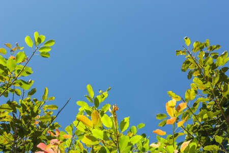 green leaf frame on blue sky background with copy space Stock Photo