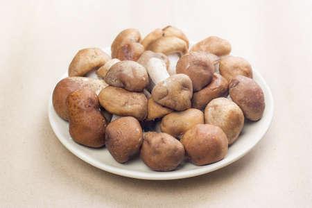Shiitake dish place on brown background