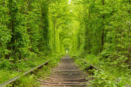 Ukraine. Spring. Railway in the dense deciduous forest.
