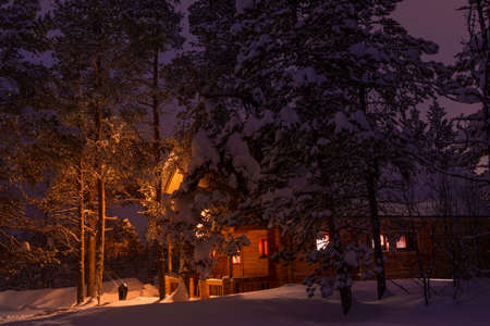 Winter Evening And Colored The Sky Tall Pines Lots Of Snow Lighted House