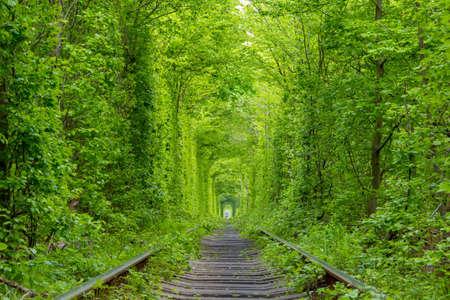 Ukraine. Single-track railway runs through dense forest thickets Reklamní fotografie