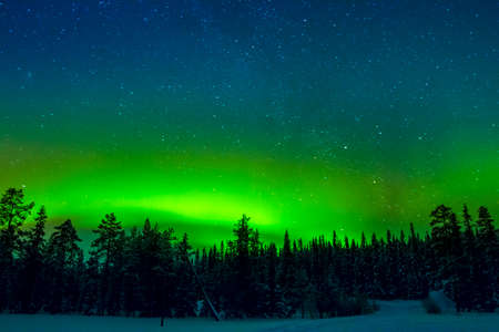 Winter Finland. Edge of the dense forest. Bright Aurora Borealis in the starry sky 免版税图像