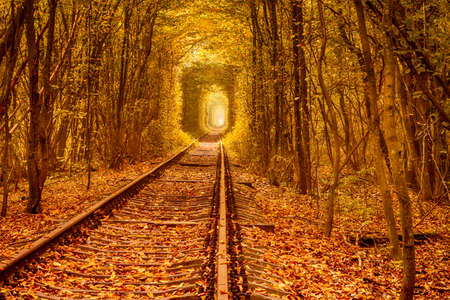 Tunnel of love in Ukraine. Railroad tracks through deciduous forest. Autumn day 写真素材