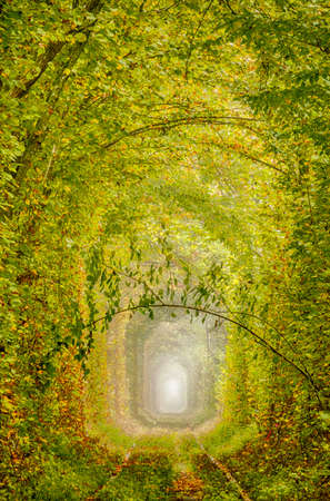 Single track railway through the autumn forest. Stylized as an oil painting