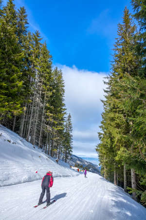 Ski resort in sunny weather. Tall spruce forest. Skier on a narrow and gentle ski track