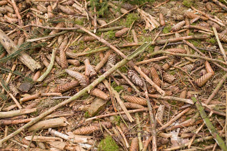 wood chip: Ground closeup view natural background. Forest ground texture. wood chip abstract background texture Stock Photo