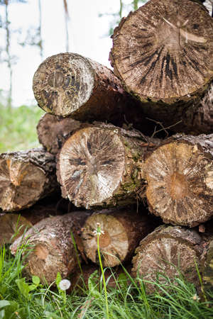 log fire: Pile of wood - texture, background. Stack of wood. Cut old trees on the grass. Log fire wood in the yard. In early spring preparation of firewood for autumn and winter. Renewable resource of energy.