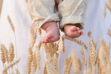 baby's feet: Closeup of babys bare feet with ears of wheat as background. Woman holding little baby in the field on a sunny summer day. Outdoors. Stock Photo