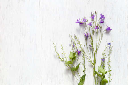 Top view on beautiful wild flowers on white wooden background.  Summer flowers, leaves and petals.  Clover, daisy, bell-flowers, forget-me-not.  Flat lay