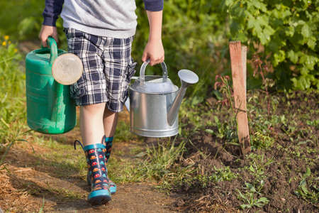 water garden: Kid boy carrying two big heavy watering cans with water. Child helping parents in the garden. Watering plants in the vegetable garden. Summer activities in the garden.