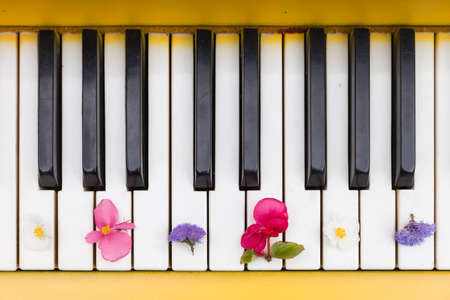 piano closeup: Top view on yellow piano. Closeup of piano keys with nice bright flowers. Music concept