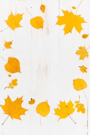 Top view on frame made of yellow autumn leaves (maple and lime) on white wooden background