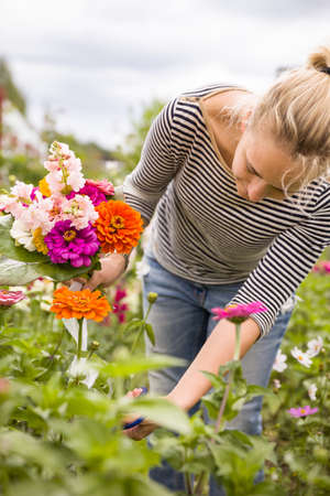 Portrait of young woman picking flowers in the garden. Making bouquet of summer flowers. Blond girl with flowers outdoor. Фото со стока