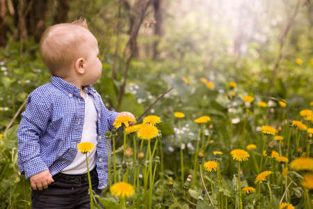 breathe easy: Portrait of cute little toddler boy making his first steps in the park on sunny day. Small child on the dandelions meadow. Stock Photo
