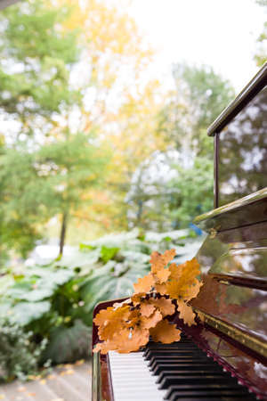Closeup of piano keys with oak leaves on them. Music concept. Autumn Stock Photo