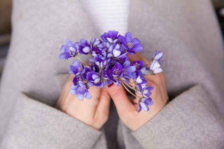 Top view on womans hands holding bunch of fresh wild snowdrops. spring flowers in girls hands.