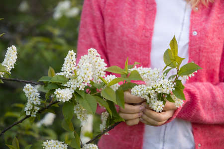 Closeup on blooming cherry in womans hands. Spring flowers. Nature. Outdoors.