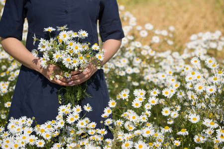 Closeup of girls hands with wild chamomiles outdoors. Daisies