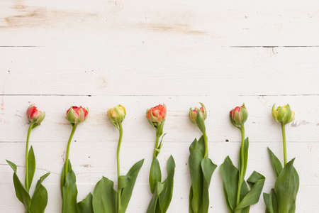 Top view on beautiful garden tulips on white wooden table background