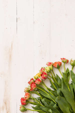 Top view on tulips on white wooden background