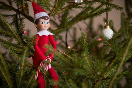 Elf toy with candy sitting on Christmas tree branch. Holiday season Stock Photo