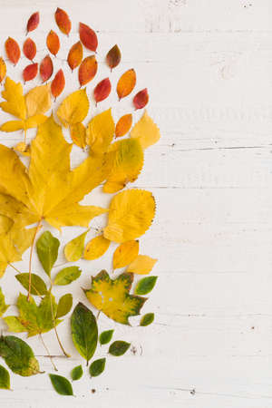 Top view on various autumn colorful leaves on white wooden background. Stock Photo