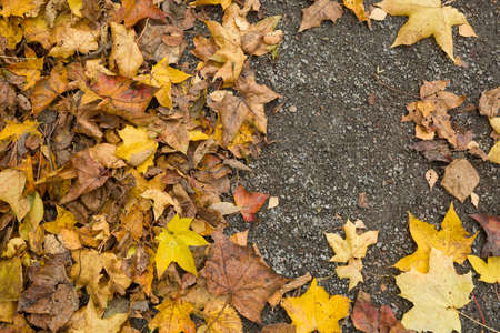 Top view on colorful dried leaves on the ground. Autumn in the park.