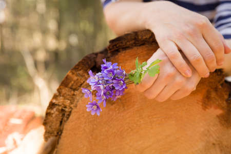 Closeup of womans hand holding first spring flowers on old trees stump. primroses or snowdrops in the forest.