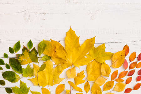 Top view on multicolored autumn leaves on vintage white wooden background. Yellow, red, orange and green leaves.