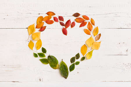Top view on various autumn colorful leaves in heart shape on vintage white wooden background. Stock Photo