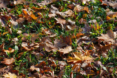 Closeup of autumn multicolored dried leaves lying on the ground. A bouquet of colorful leaves of red, yellow, red, green, orange. Autumn concept