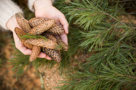 Top view on womans hands full of pine cones. Christmas, holidays and winter concept