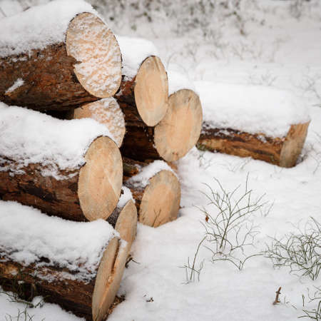 Its winter and its snowing. Logs piled on outdoors. Stack of cut wood under the snow. Winter background Stock Photo
