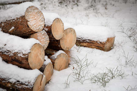 Logs piled on the street. Stack of cut wood under the snow. Its winter and its snowing.
