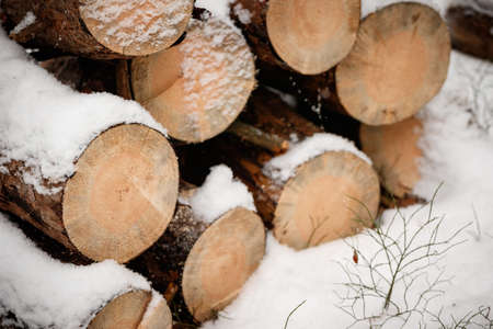 Closeup of pile of logs lies on outdoors. The ground and trees are covered with a thick layer of snow. Snowy morning on a cold winter day.