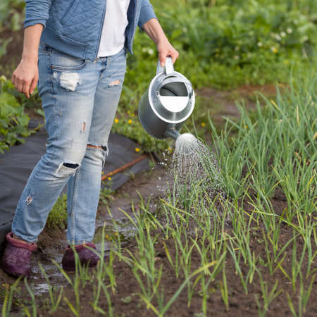 Woman with watering can working in the garden. Gardening Stockfoto