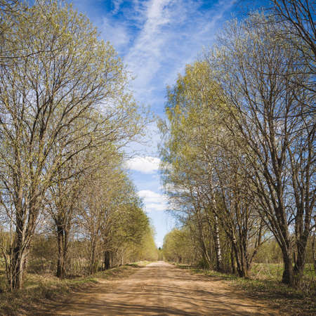 Closeup of a country road surrounded by trees. Spring rural landscape with blue sky and clouds. Country road